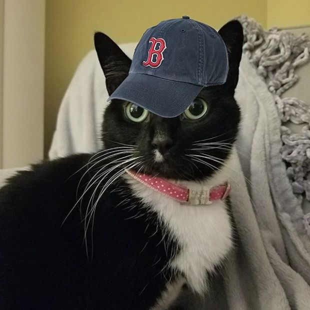#tbt to when I rooted for the #RedSox... oh wait, that's every day. Let's go Red Sox, beat the Yankees! Swipe to see the pic Momma took of Mookie last Sunday 😺 #worldaccordingtocasey #tuxedocat #catsForTheRedSox