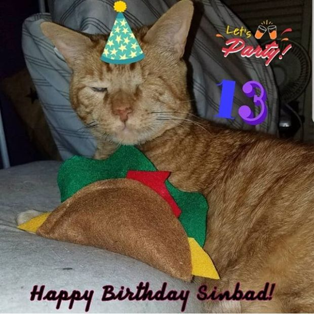 Happy Birthday to our friend Sinbad from @devilsreject13!! Because there are only so many times you turn lucky 13! Pawty on! 🎉🎂🍹🐱🐾#sinbadslucky13part2